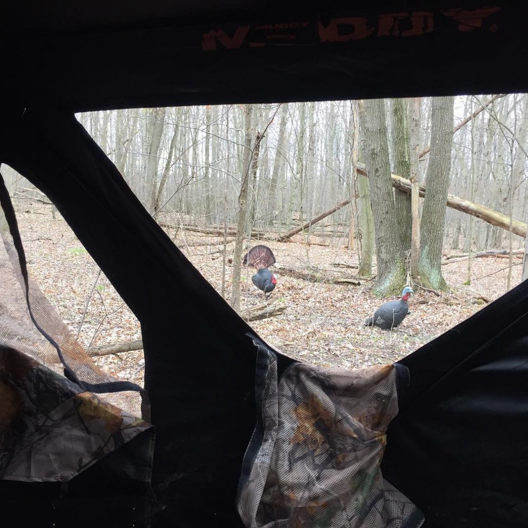 Hunting Turkey from a blind